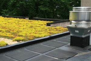 Rooftop Garden Full